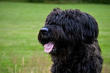 dog-2849442_1920.jpg