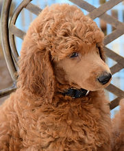puppies-2188648_1920_edited_edited.jpg