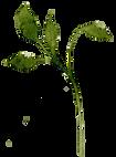 b.leaf.285.png