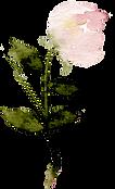 b.rose.161.png