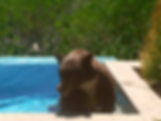 Bear in hot-tub 640x480.png