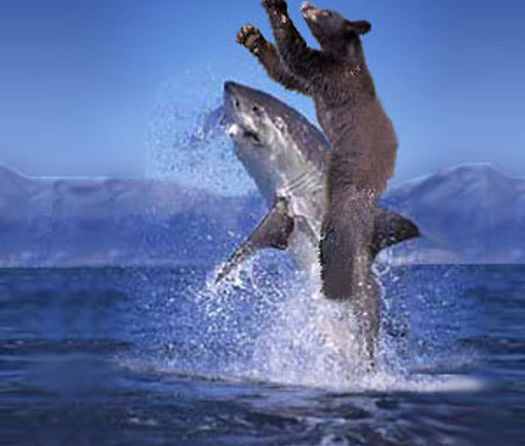 bear_riding_a_shark_by_sumplesnoob.jpg