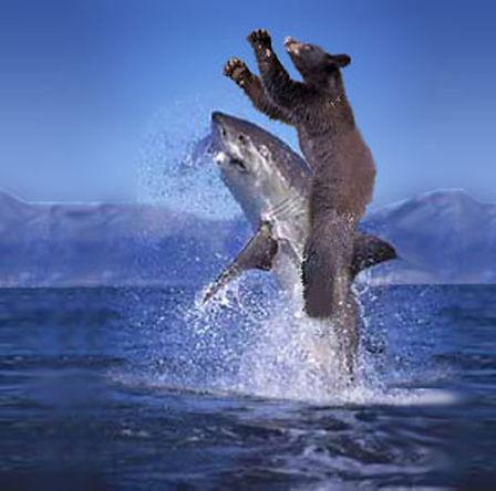 bear_riding_a_shark_by_sumplesnoob.jpg