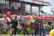Melbourne cup transfers, LIMOWAY melbourne cup transfers