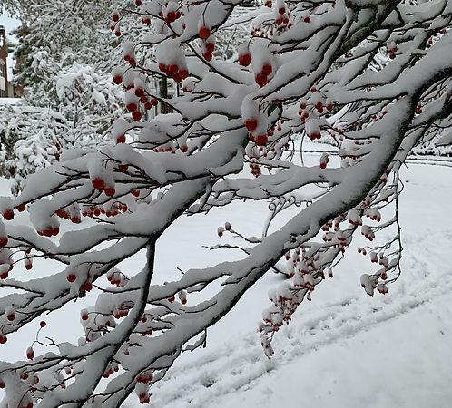 WinterBerries-Waddel_cropped.jpeg
