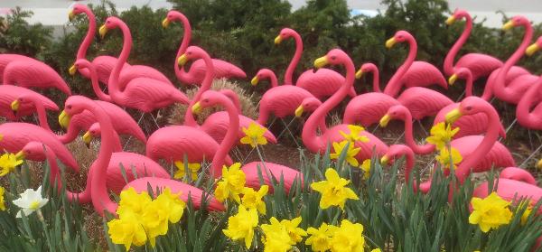 2021 - Flamingoes-by-Jean-Stringham-23Ap