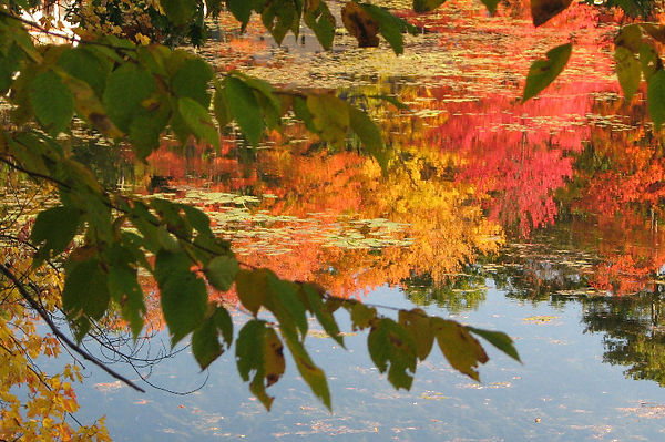 2021-10-18 Fall reflections by Mandy Waddell, Lasell Village_edited.jpg