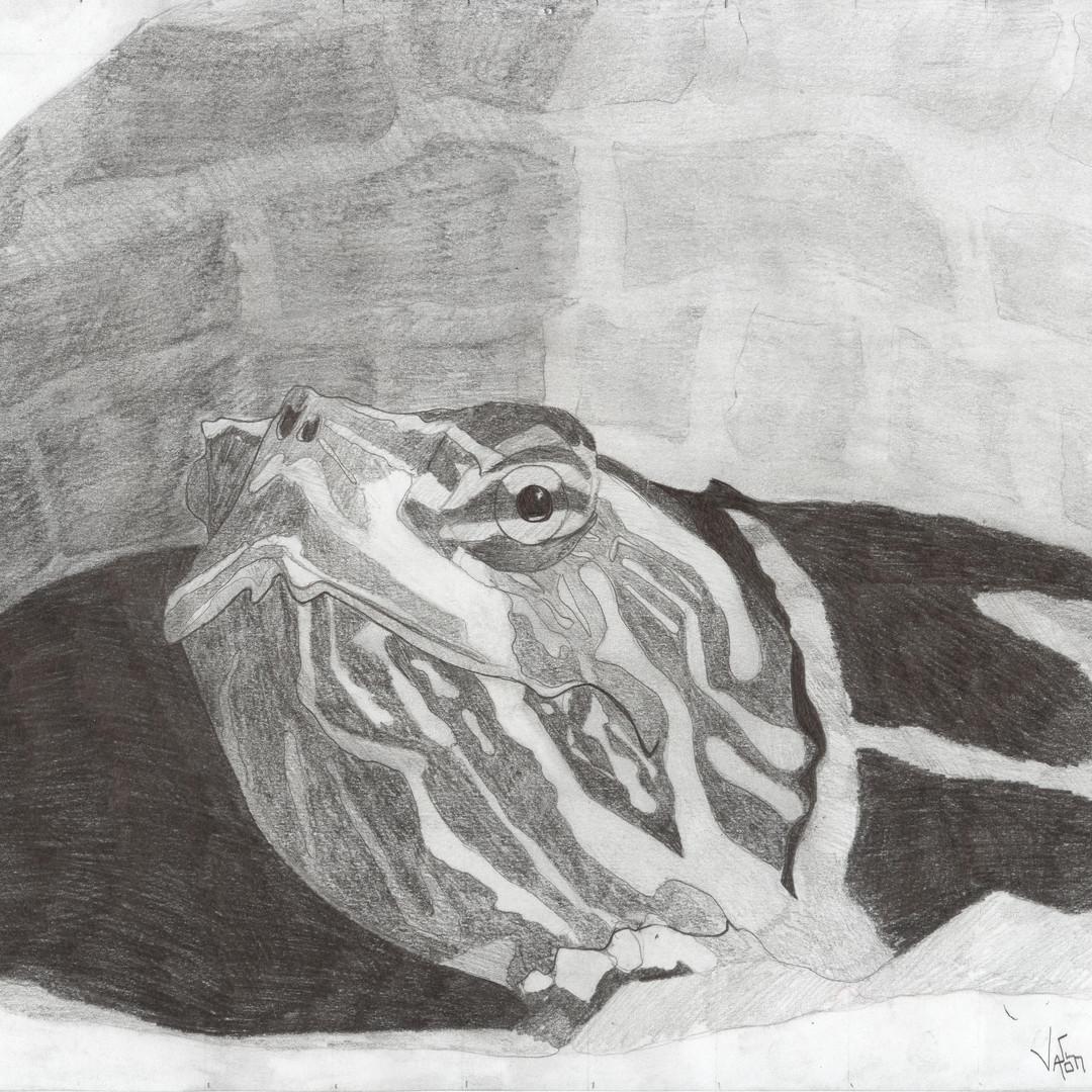 Art Painted Turtle