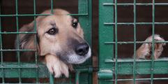 dog-shelter.png