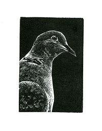 WE - Dove.jpg