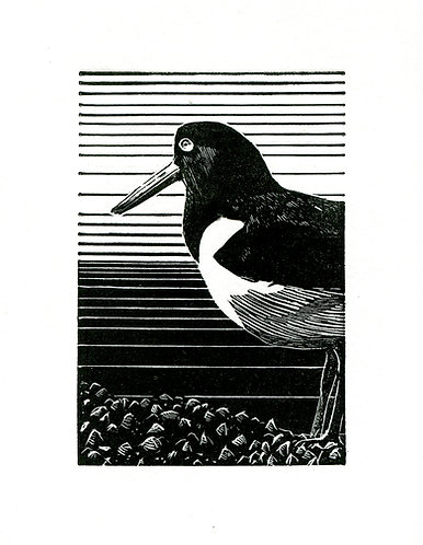 OYSTER CATCHER (WE)