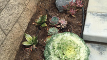 Drought tolerant plants and desert landscaping