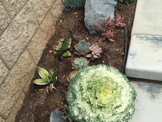 Drought tolerant plants and desert landscaping