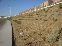 Drip irrigation precipitation rate and irrigating slopes