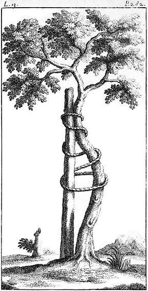 the-orthopaedic-tree-2.jpg