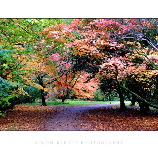 Autumn 0457.jpg