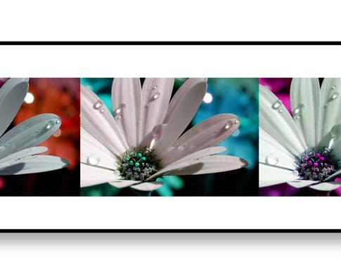 Daisy Triptych web.jpg