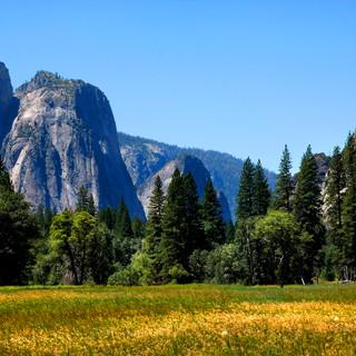 Yosemite Prairie Landscape 0339.jpg