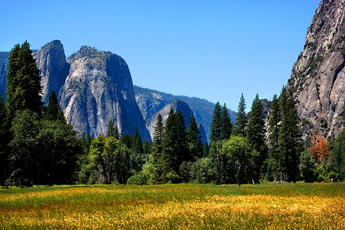 Yosemite Prairie Landscape 0339