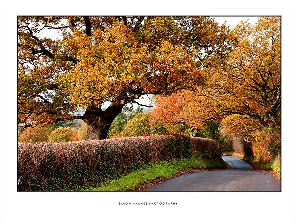 Autumn Lane 2000 pxl 16x12 border.jpg