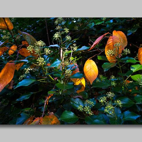 Autumn glow 200pxl.jpg