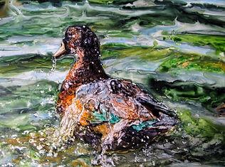 Water Off a Duck's Back ap.JPG
