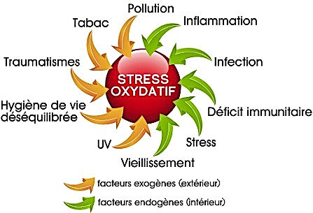 air_stress_oxydatif.jpg