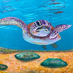 Sea Turtle For website