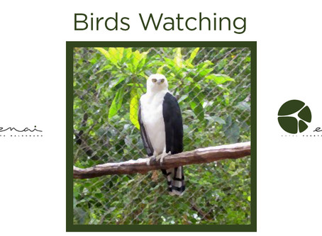 Black and white - Hawk Eagle - Birds Watching