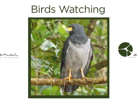 Barred Hawk - Birds watching
