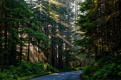 forest-1598756.jpg