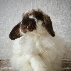 ブレイヅ,うさぎ,ウサギ,兎,rabbit,bunny,blaze