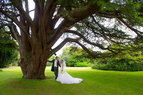 Ancient tree at Dalhousie Castle Wedding