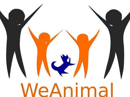 Assicurazione  professionale Operatori Interventi Assistiti con gli animali (IAA)