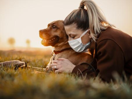 Gli Interventi Assistiti con gli animali (Pet therapy) e una possibile ripresa.