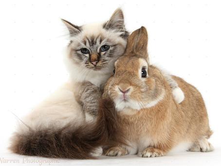 Corso base Coadiutori del gatto e del Coniglio negli IAA