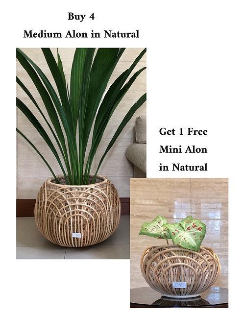 4 Medium Alon + Free Mini Alon