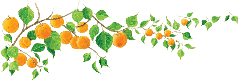 banner pics_apricot.png
