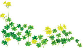 footer_oxalis.png
