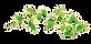 Leaf%25201_edited_edited.png