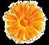 Flower%205_edited.png