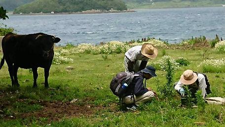 牧場で糞虫を探している様子.jpg