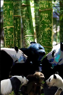 Panda Panda Panda