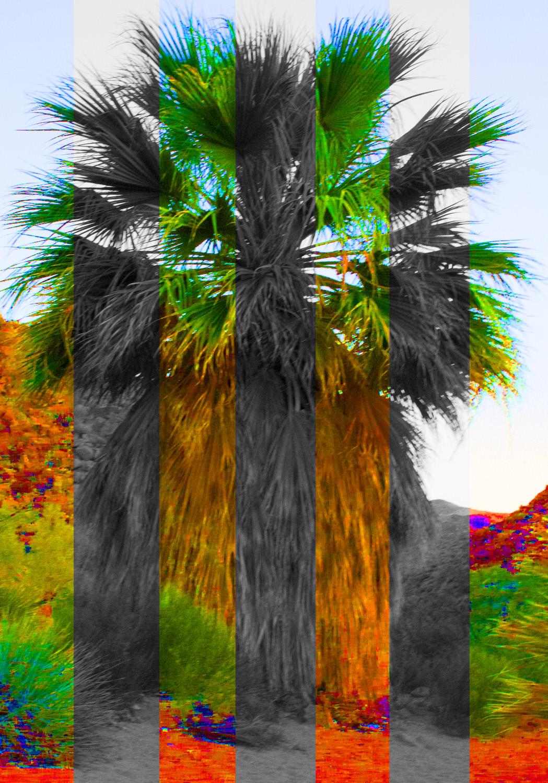 Striped Palms