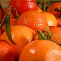 salade fruit photo shoot agence Yuzu