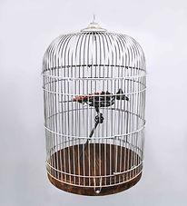 Birdcage LowRes .jpg
