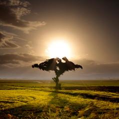 Natureza | Daniel Rodrigues