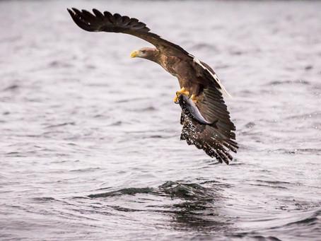 Adler, Wale und das tolle Licht der eben wiederkehrenden Sonne