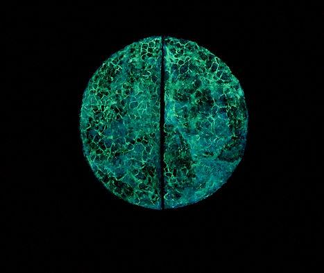 Bamboo Moon.d.jpg