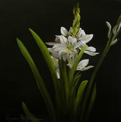 LITTLE WHITE FLOWERS.jpg